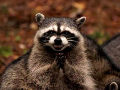 I Fought A Raccoon For A Bag Of Doritos, Here's What Happened